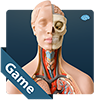 Anatomicus Anatomy Game