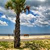 Jigsaw: Beach Tree