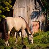 Jigsaw: Horse Grassing