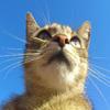 Jigsaw: Lookout Cat 2