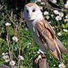 Jigsaw: Owl Guard