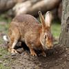 Jigsaw: Pet Bunny