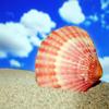 Jigsaw: Seashell