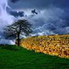 Jigsaw: Tree In Storm