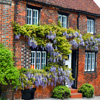 Jigsaw: Wisteria Covered House