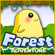 Forest Adventure